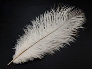 Feather for Fanning
